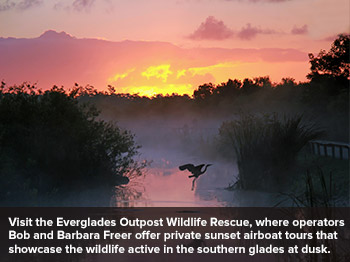 Everglades Outpost Wildlife